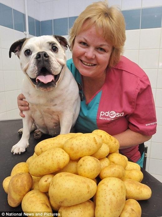 Daisy sau khi giảm cân, đống khoai tây tương đương với cân nặng mà nó đã giảm được