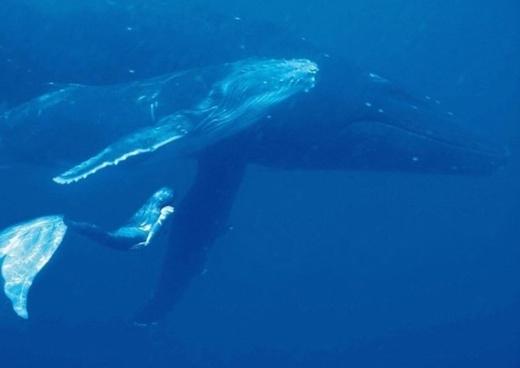 Trải nghiệm yêu thích nhất của cô ấy là được lặn cùng với cá voi ở Tonga