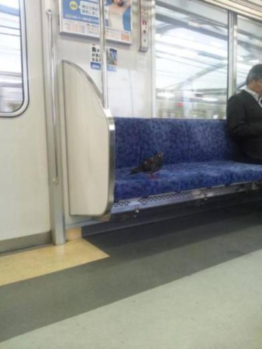 'À! Chim thì cũng phải có chỗ ngồi chứ nhỉ'.