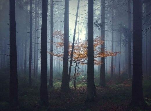 Đây phải chăng là khu rừng của cô bé quàng khăn đỏ?