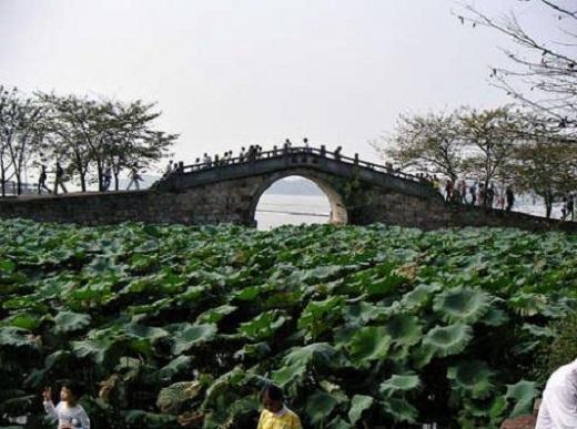 Hồ sen cạnh Thái Hồ cũng là nơi yêu thích của nhiều người   Vào mùa hạ, đặc biệt là khi nắng ráo và ít mưa là thời điểm sen nở đẹp nhất