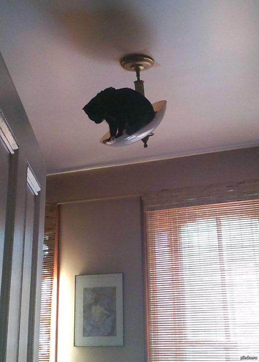 'Có khi nào cái đèn này nó bị rớt xuống không nhỉ?'
