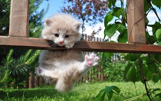'Ai bảo mèo nhỏ thì không thể tập làm ninja được nào'