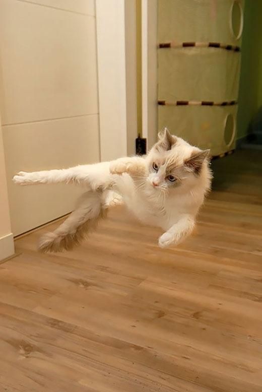 'Hãy xem sức mạnh của cú đá thần tốc của loài mèo đây'