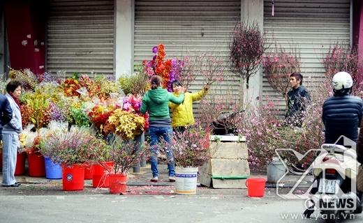 Hoa đào ngày Tết đã bắt đầu được bày bán rất nhiều.
