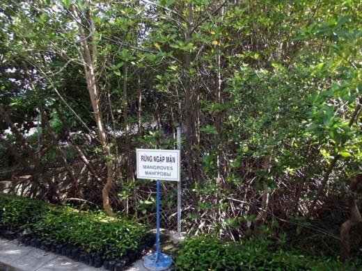 Mô hình rừng ngập mặn