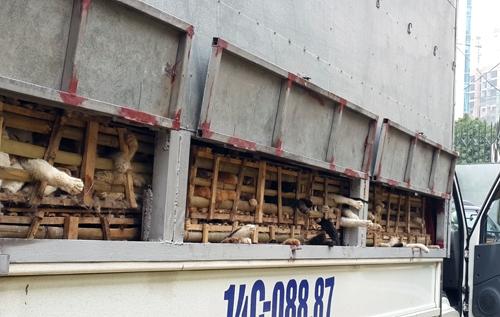 Gần 3 tấn mèo không được kiểm dịch, nguồn gốc không rõ ràng được nhập từ Trung Quốc về Hà Nội đã bị tiêu huỷ. Ảnh: Sơn Dương.