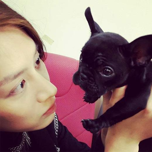 Heechul tỏ ra thích thú khi lần đầu 'diện kiến' chú chó của Kangin: 'Thì ra mày là Chunhyang à. Kangin thật là giỏi đặt tên. Young Chun, Chunhyang. Theo lời của Siwon thì khi cô bé này lớn hơn, nó sẽ xấu hơn cả Bugsy.'
