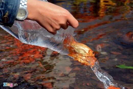 Thả cá chép tiễn Táo quân về trời theo mong muốn cầu chúc cho một năm mới tốt lành, vạn sự như ý, mọi nhà được ấm no. Tập quán này còn giúp sông hồ, kênh rạch hồi sinh, vì thế nhiều người rất nâng niu mỗi khi thả cá, đảm bảo cá được phóng sinh đúng ý nghĩa.