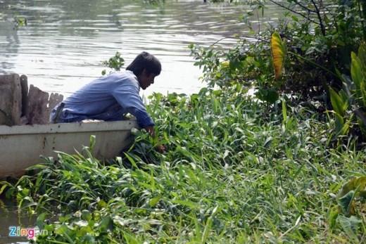 Những người vớt cá còn dùng tay, vợt lùng bắt những chú cá chép yếu ớt không bơi ra giữa sông được mà chui vào trong lùm cỏ hai bên bờ.