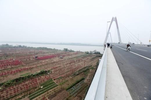Làng đào Phú Thượng nhìn từ cầu Nhật Tân.