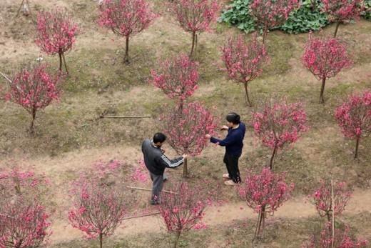 Những người kỹ tính thường lên tận vườn để chọn được cành hoặc cây ưng ý.