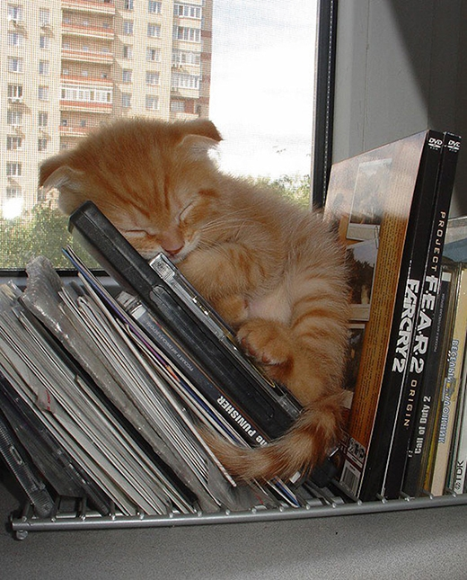 Chà, một chú mèo am hiểu sách và âm nhạc.