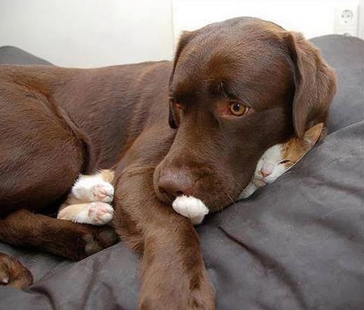 Không gì an toàn và được bảo vệ tốt hơn một chú chó.