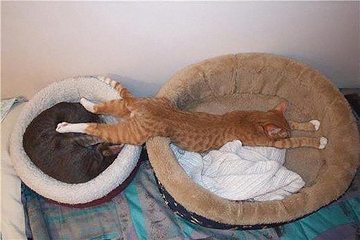Xin lỗi, lưng tôi khá dài nên tôi cần đến hai cái gối ngủ như vầy.
