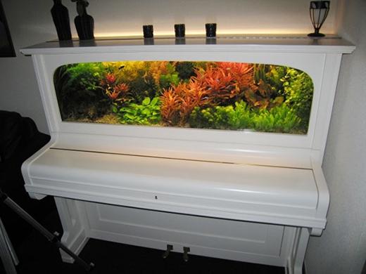 Họ đã tạo nên hồ cá mini trong cái đàn piano này như thế nào nhỉ?