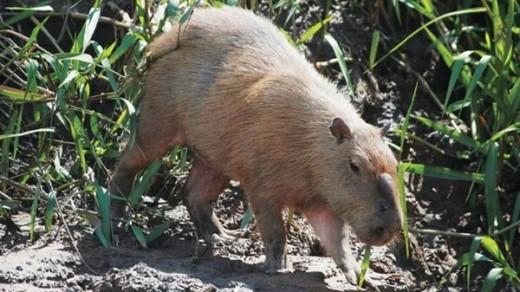 Động vật hoang dã Amazon.