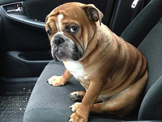 'Cậu chủ đang nói đùa đúng không?'   'Tôi nhảy xuống xe ngay bây giờ đấy!!!'