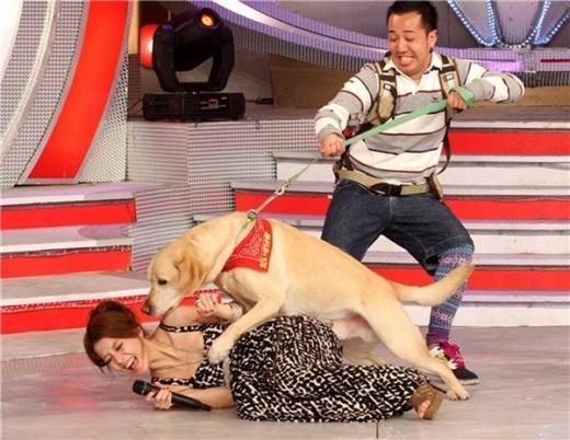 MC Lợi Tinh khi quay show truyền hình đã gặp tình huống chưa từng có trong tiền lệ. Chú chó khách mời của show đã bất thình lình xông hẳn về phía cô và khiến cô ngã nhào trên sân khấu. Rất lâu sau, nhân viên mới mang được chú chó ra ngoài.
