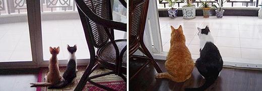 'Có hai con mèo ngồi bên cửa sổ. Không có con nào đổi chỗ'