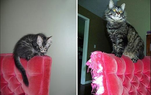 Sau một năm, cái ghế nệm đã không còn nguyên vẹn.   'Thật may là tôi vẫn còn chịu được trọng lượng của nó'