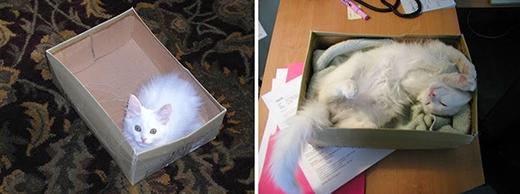 Sau nhiều tháng, cái hộp này vẫn là chỗ ngủ yêu thích của chú mèo.
