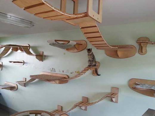 Phòng chơi dành cho mèo