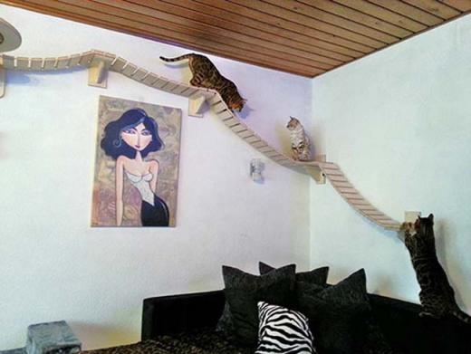 Mèo có lối đi sang các phòng khác