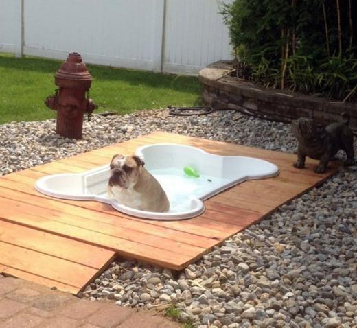 Bể bơi hình khúc xương cho chó