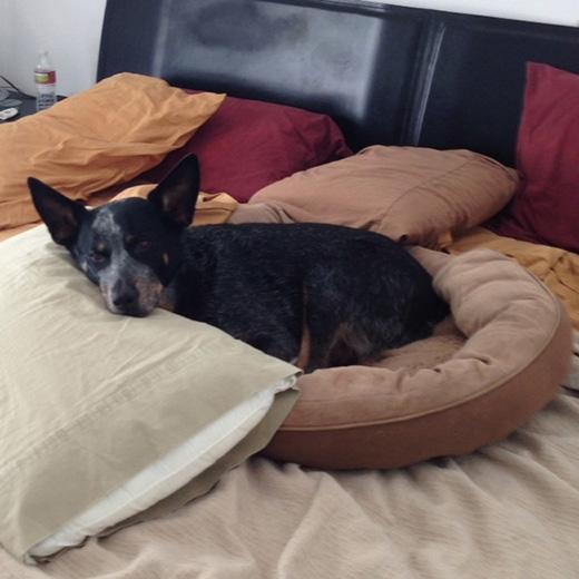 'Đấy, chỉ cần mang theo giường ngủ của tôi lên là ổn rồi!'