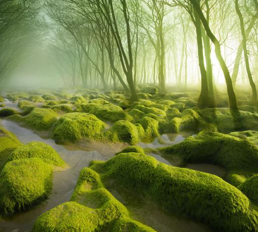 Khu rừng đan xen đầm lầy rêu ở Rumani.