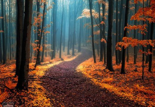 Rừng phủ lá vàng ở dãy White Carpathians giữa CH Séc và Slovakia.