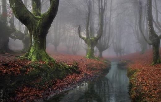 Rừng Otzarreta huyền bí ở Basque, Tây Ban Nha.