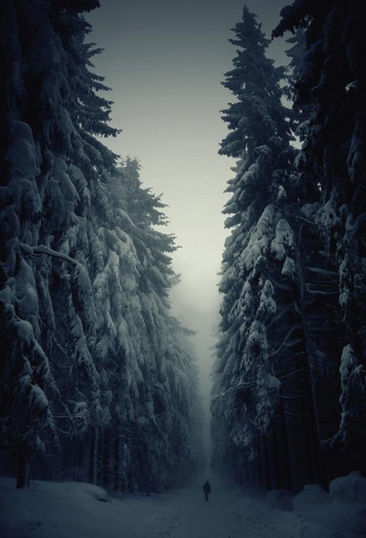Rừng cây khổng lồ bị tuyết trắng bao phủ ở CH Séc.