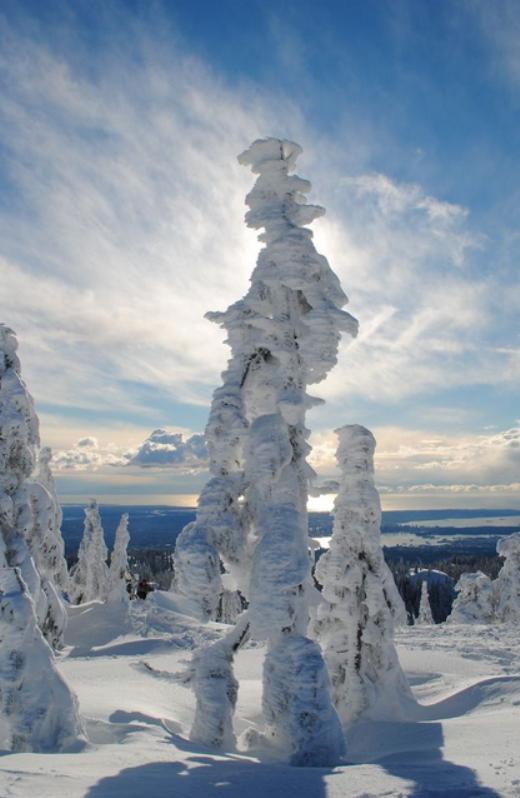 Rừng cây bị đông cứng bởi băng tuyết tạo thành những hình dáng kỳ quái trên núi Seymour, British Columbia.