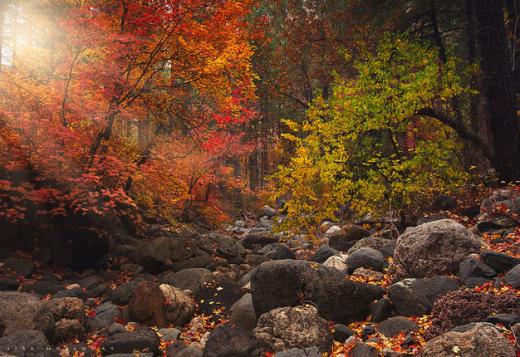 Rừng sồi mùa thu ở Arizona, Mỹ.
