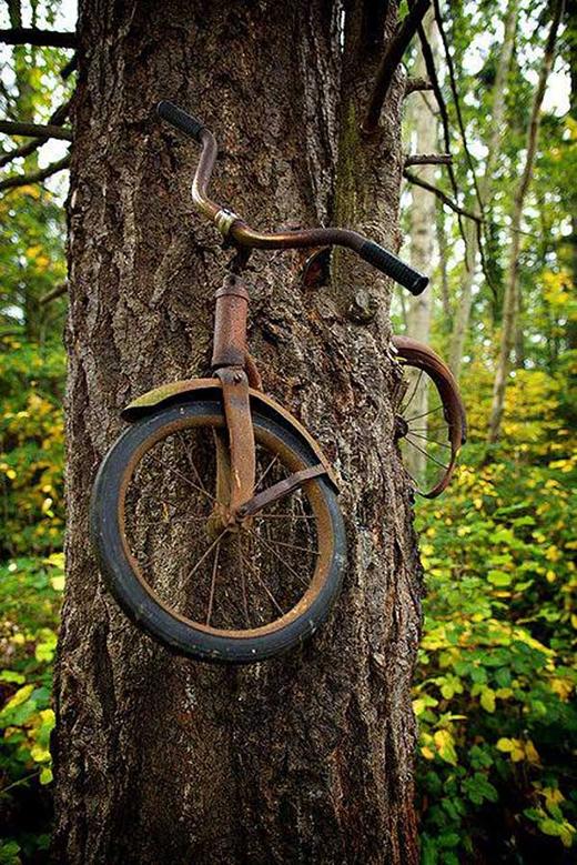 Một chàng trai xích chiếc xe đạp của mình lên thân cây trước khi ra chiến tranh vào năm 1914, và đến cuối cùng, anh ấy không bao giờ trở lại nữa.