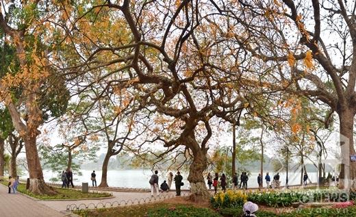 Tán cây rất lớn và vươn xa hoàn toàn thu hút người dân đi qua đây.