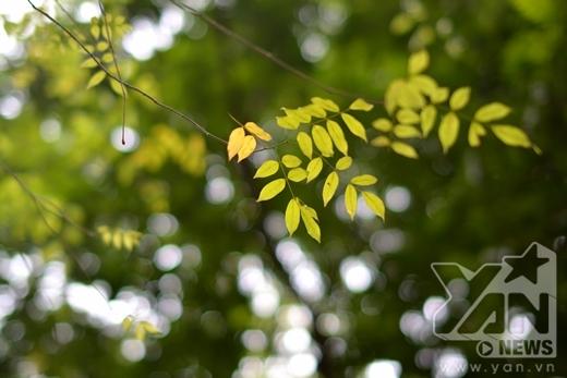 Vương vấn đâu đó trên cành cây là những chiếc lá xanh non.
