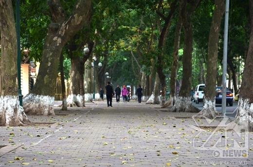 Con đường Phan Đình Phùng được bao phủ bởi lá...