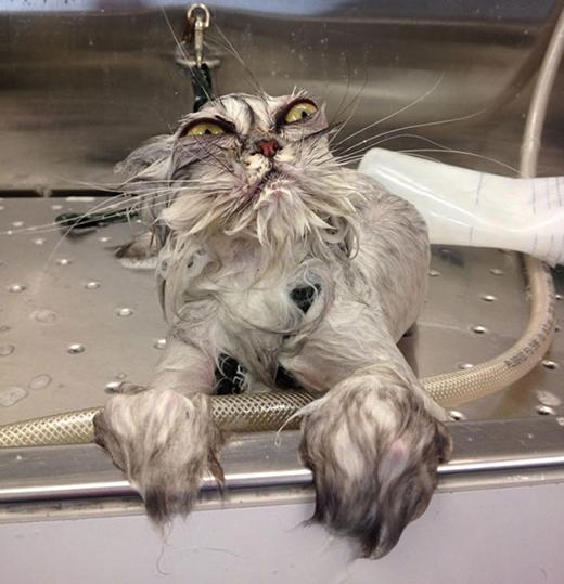'Tôi ghét nước lắm, đừng có nhúng nước tôi nữa!!!'