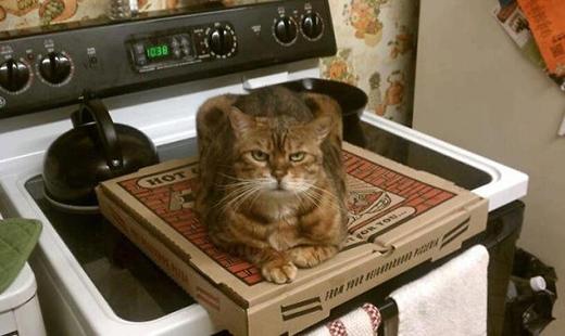 'Cái pizza này là của tôi. Ngon nhào vô!!!'