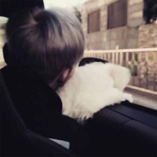 Tao khoe hình tâm trạng ôm thú cưng và nhìn ra cửa sổ khi đang đi trên đường.