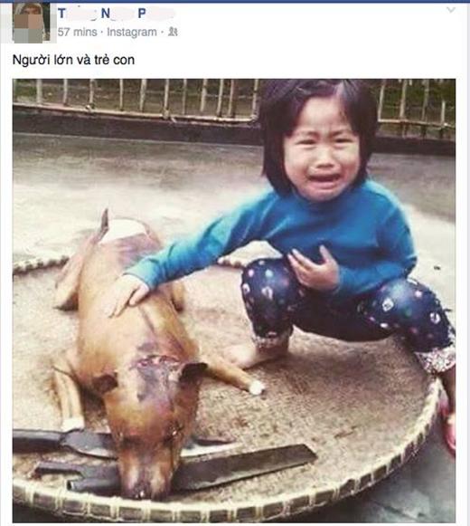 Họ so sánh sự khác nhau giữa người lớn và trẻ con trong quan điểm ăn thịt chó.
