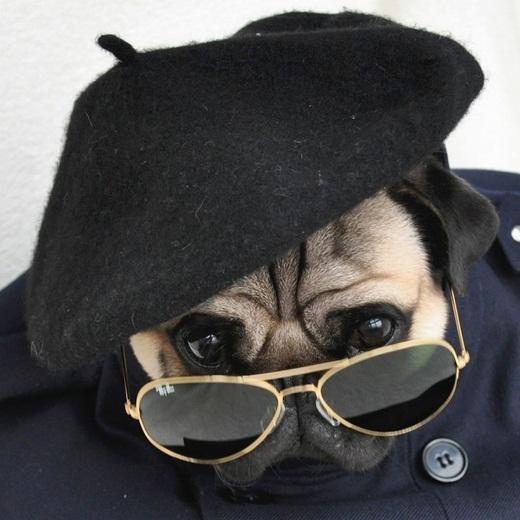 Nghiêm túc với kính đen và mũ bê rê.