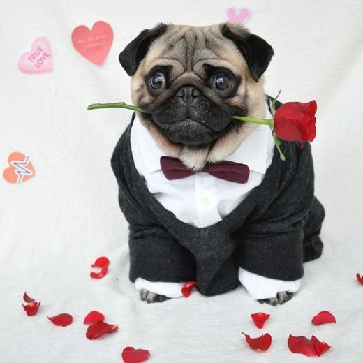 Chuẩn bị sẵn sàng để đi tỏ tình ngày Valentine.