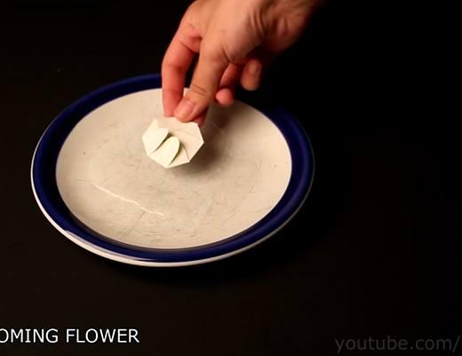 Gấp gọn một bông hoa giấy, thả vào nước