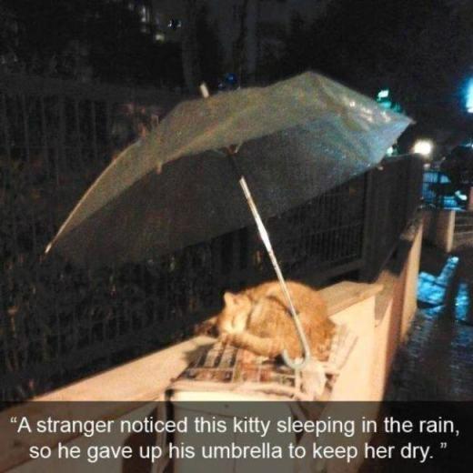 Một người qua đường đã để lại chiếc ô của mình cho chú mèo đang ngủ say khi trời đột ngột mưa to. Còn gì ấm áp hơn một sự quan tâm ân cần như thế?!