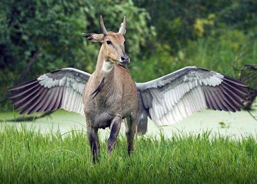 Chú ngựa biết bay trong truyền thuyết đây rồi.