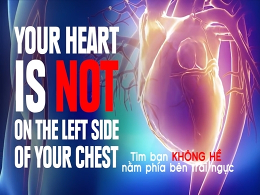 Trái tim không hề nằm bên trái nhé!